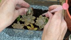 How to make a Terrarium   Layers