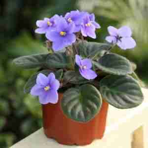 10 Flowering Plants That Are Better Than a Bouquet
